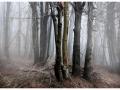 Lost in Mist.jpg