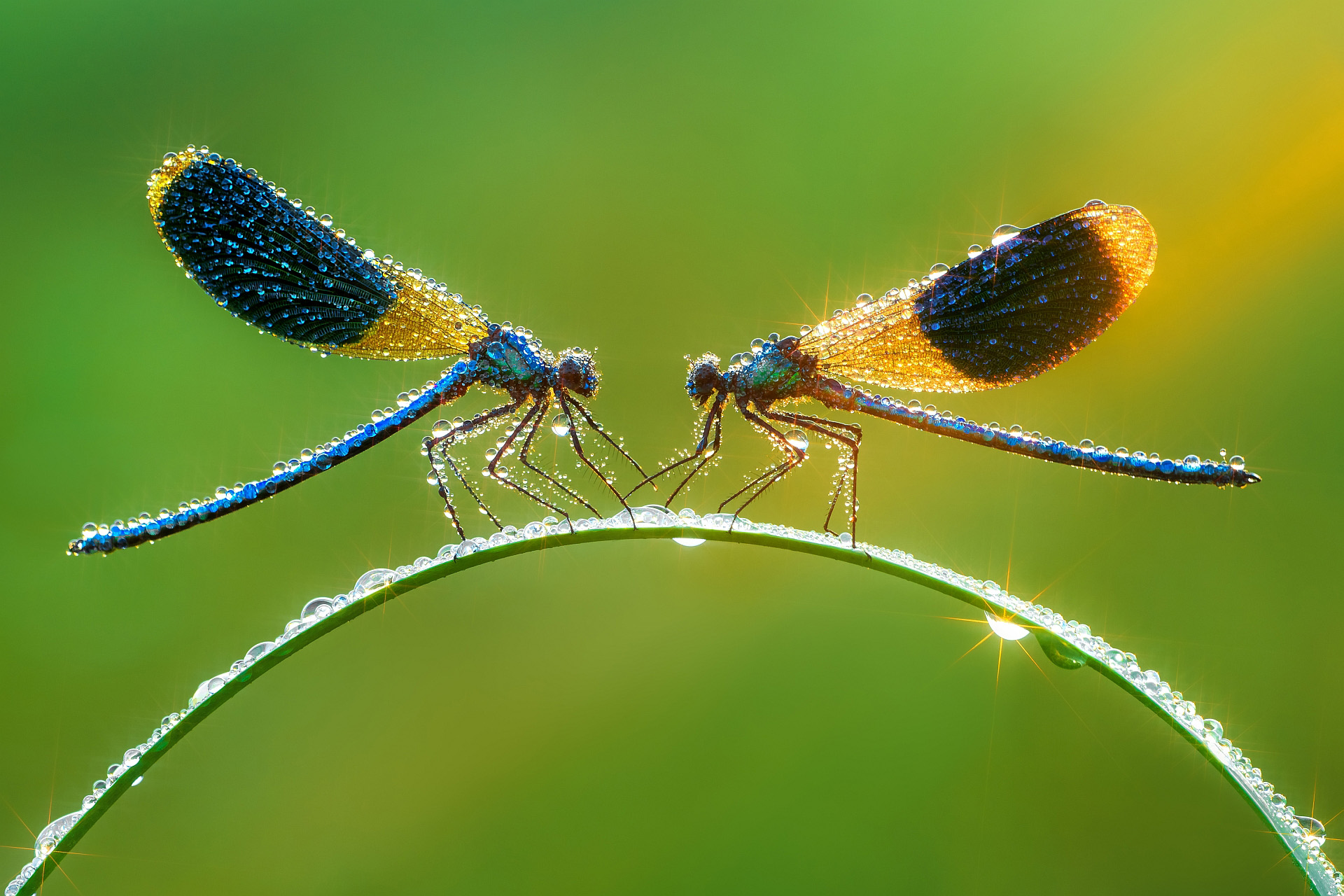 Damselfly magic.jpg